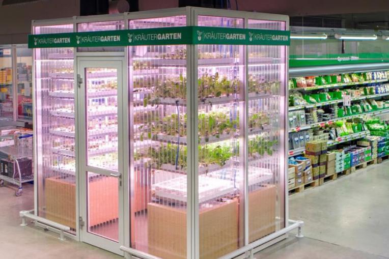 Metro Cash   Carry в Германии  огород в магазине 2792e780473